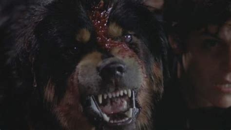 what of was cujo cujo remake to ruin cujo childhoods by ripping ally sheedy