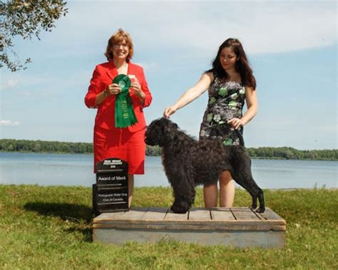 breeder directory canadian kennel club breeders directory httpblogseattlepicom breeds picture