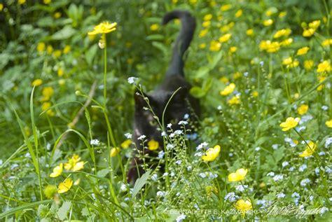 your backyard wildlife habitat begin your backyard wildlife habitat begin in spring to control