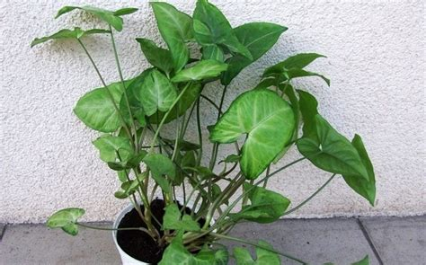 poisonous house plants to dogs dangerous house plants for dogs 28 images common house plants that are toxic to