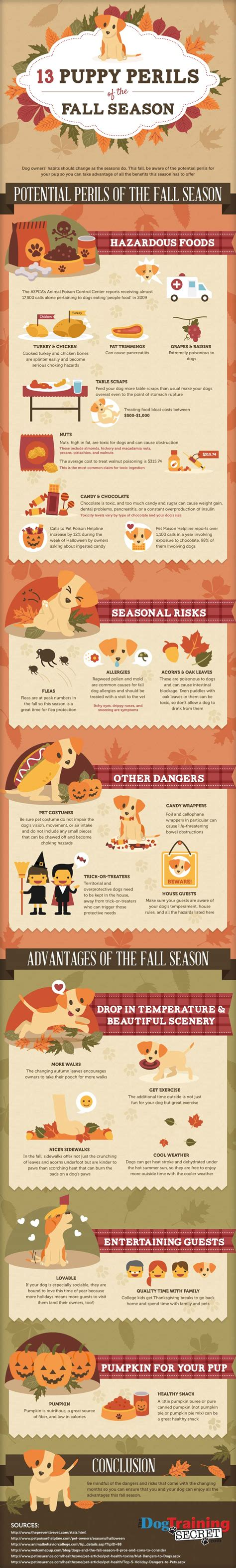 puppy tips puppy care tips in fall infographics mania