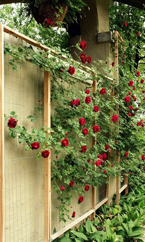 Cheap Garden Trellis Ideas 10 Best Wire Trellis Images On Pinterest Wire Trellis Diy And Backyard