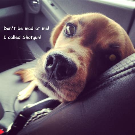 Dont Be Mad At Me Meme - dont be mad at me i called shotgun