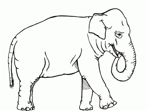 coloring page for elephant get this african elephant coloring pages free printable