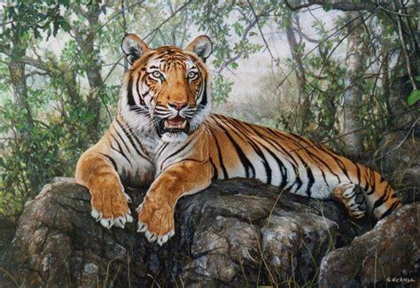 imagenes de tigres leones y leopardos leopardo guepardo jaguar y tigre ojo de leopardo