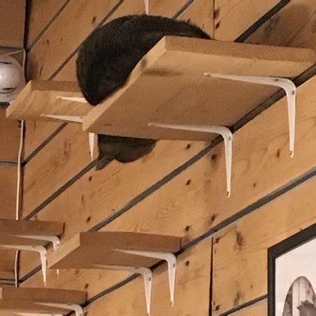 la compagnie des chats avignon omd 246 om restauranger