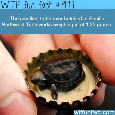 12 incredible orchid facts that no one ever told you wtf facts funny interesting weird facts image