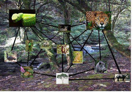 cadenas redes y piramides troficas wikipedia reserva nacional quot el triunfo quot red tr 243 fica