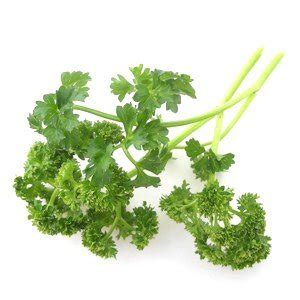 can dogs eat parsley can i give my parsley why parsley is great for pet dogs