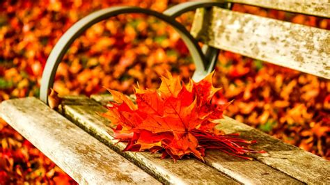 Owl Fall Leaf Iphone All Hp autumn leaves on the bench in the park hd wallpaper