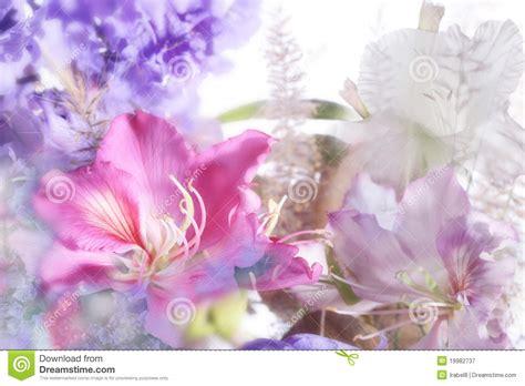 imagenes variadas y hermosas flores ex 243 ticas hermosas fotograf 237 a de archivo libre de