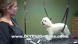 how to do a puppy cut on a yorkie how to groom a maltese puppy cut do it yourself grooming vidinfo