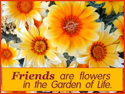 Images Of Flowers In The Garden Gold In The Clouds Flowers In The Garden Of