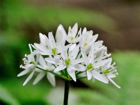 fiori bianchi nomi nomi fiori bianchi idee di design per la casa