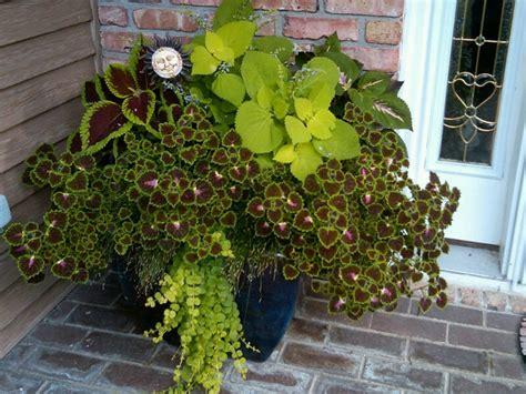 Coleus Planter by Coleus Planter Gardening And Porch Decor