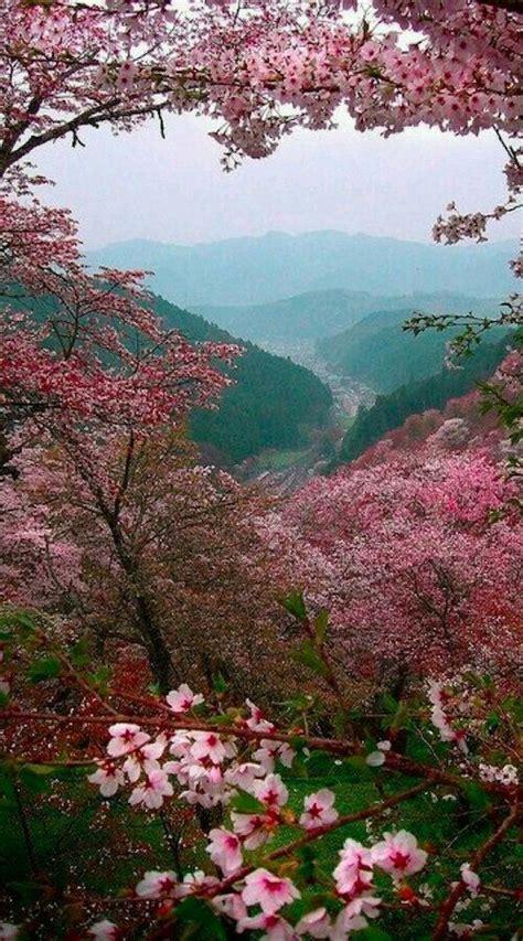 alberi in fiore 17 migliori idee su alberi in fiore su alberi