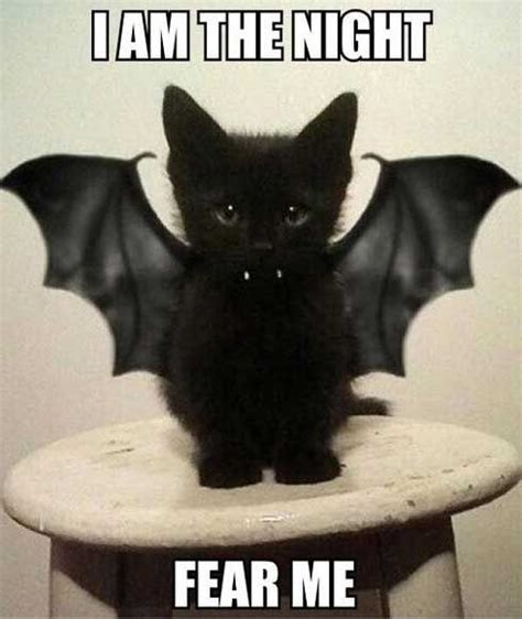 Funny Halloween Meme - 25 best halloween memes images on pinterest funny