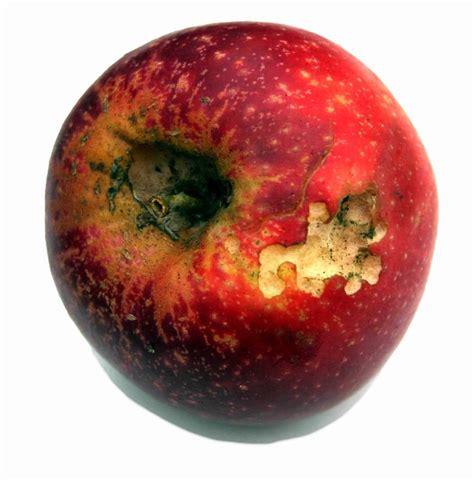 App L by Fruitveg Apple Rotting 06