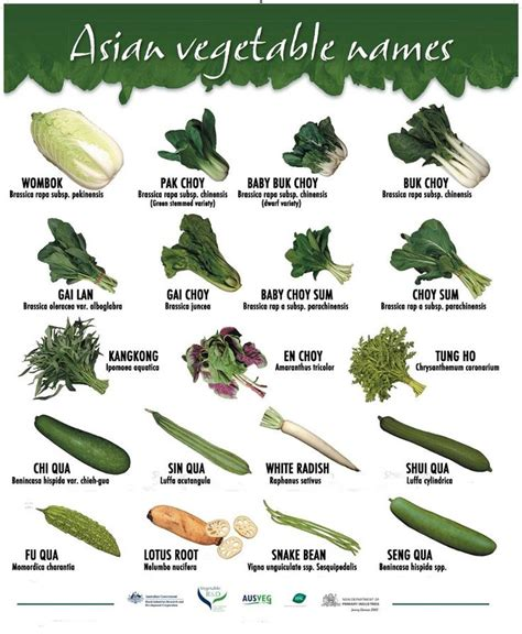 types of garden vegetables 25 great ideas about different types of vegetables on