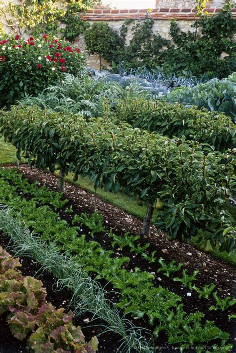 671 Best Images About Beautiful Vegetable Gardens On Pinterest Attractive Vegetable Garden