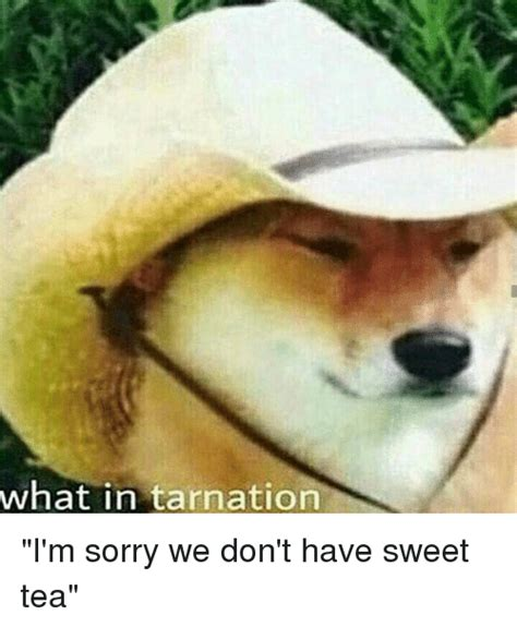 Sweet Tea Meme - 25 best memes about what in tarnation what in tarnation