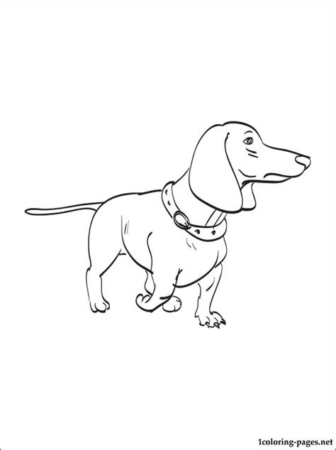 dachshund puppies coloring pages dachshund coloring page coloring pages
