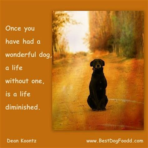 comforting quotes about death of a dog pet loss poems quotes dogs image quotes at relatably com