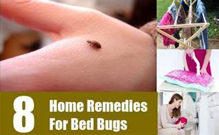 home remedies for bed bug bites 8 home remedies for bed bugs treatments cure