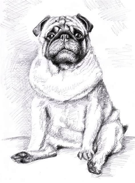 pug black and white drawing saatchi the pug drawing by zeug