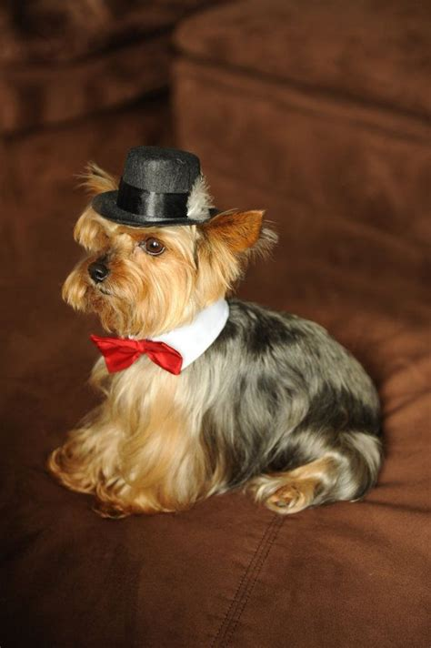 puppy hats hat for x small breed fedora top hat style with feather