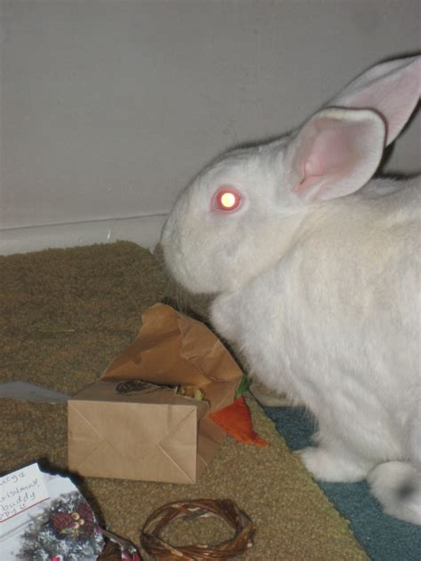 are rabbits color blind eye scanning rabbit vision the bunny