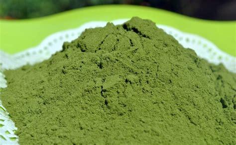 membuat zpt dari daun kelor pengolahan serbuk daun kelor tulisan kelor