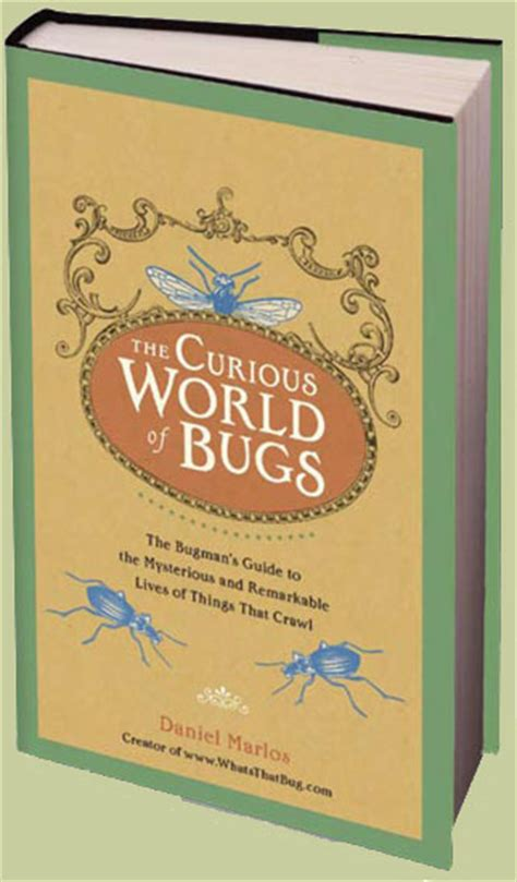 the curious world of curious world of bugs archives what s that bug