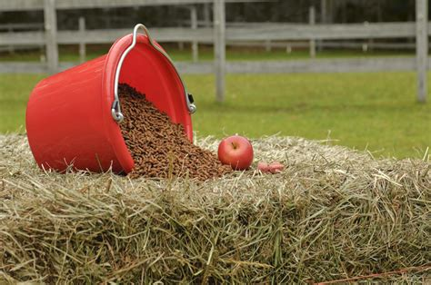 the optimal way to feed your horse part 3 the ideal