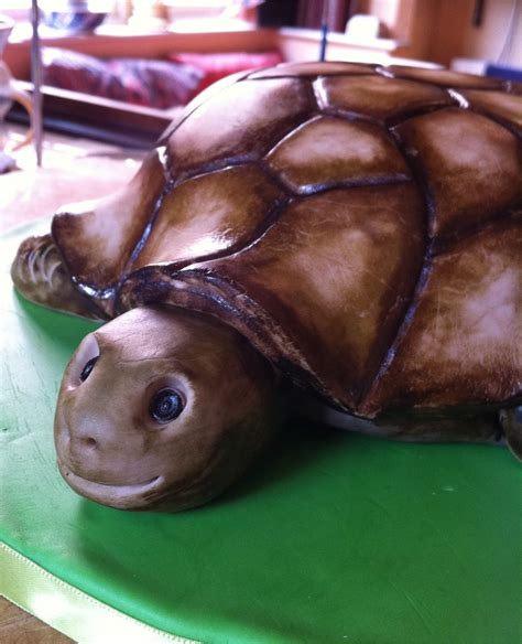tortoise creature comforts hamblemouse cakes a tortoise a train and a bit of star