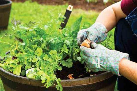 plant a container herb garden garden grit magazine container vegetable gardening 101 farm and garden grit
