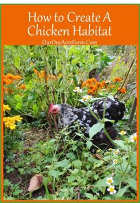 how much room does a chicken need how much space do chickens really need to express their instincts what of quot habitat