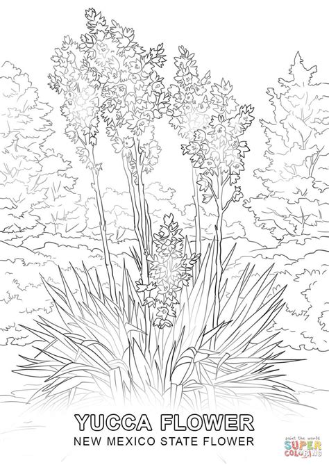 new mexico state flower coloring page free printable