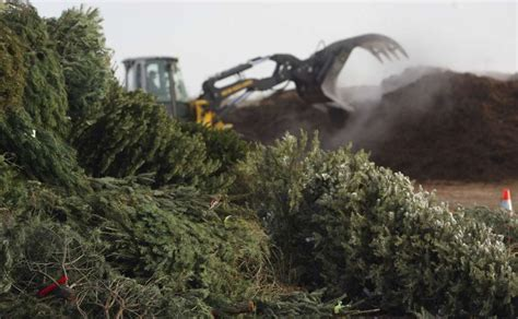 city to open christmas tree recycling drop off locations