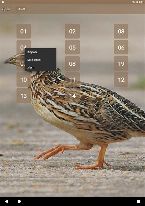 quail bird sounds android apps on google play