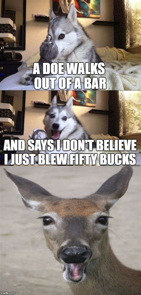 Pun Dog Meme - bad pun dog bad pun dog pinterest bad pun dog pun