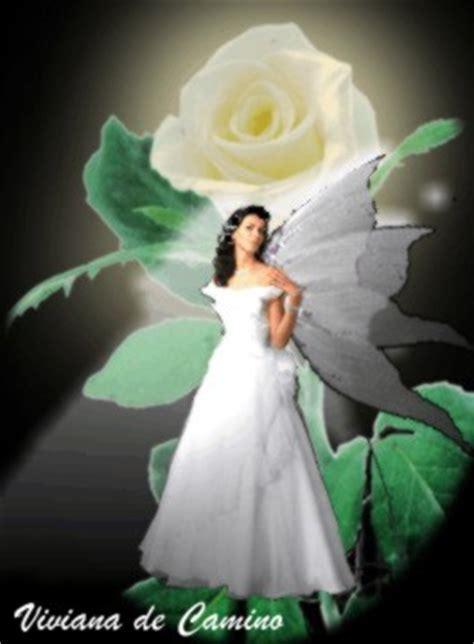 imagenes de hadas blancas imagenes angel en una rosa blanca iluminada