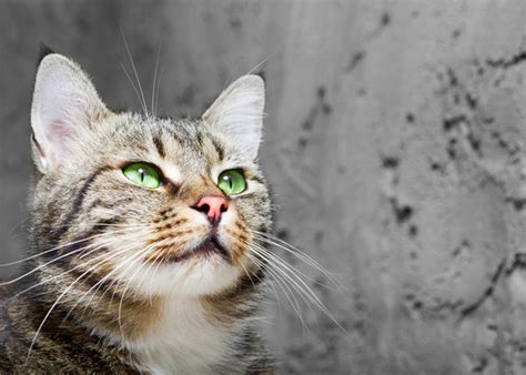 purpose of whiskers facts about cats whiskers boxer breed facts