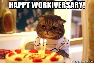Birthday Cat Meme Generator - happy workiversary birthday cat meme generator