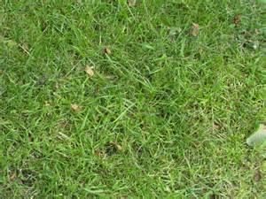 texture grass 2 by namenotrequired on deviantart