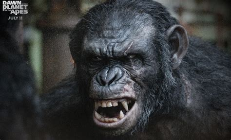 Awn Of The Planet Of The Apes by Koba Is Dangerously Playful In Clip From Of