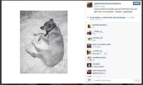 celebrity instagram account names you can now follow ariana grande s dogs on instagram