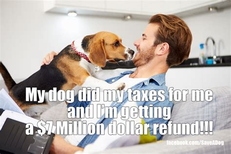 things to buy for a puppy 10 things your wants to buy with your tax refund dogtime