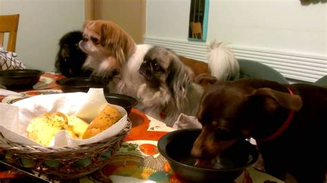 dogs at dinner table dogs family dinner at thanksgiving 2014