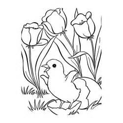 coloriage printemps poussin tulipes imprimer gratuit